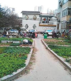 封闭小区的围墙要绿化植被