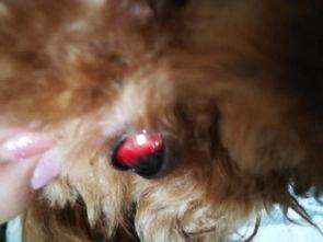 眼睛充血一样特红特红
