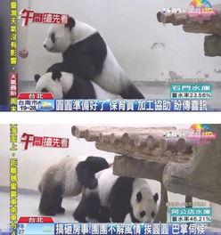 赠台熊猫不解风情搞砸房事 挨 老婆 巴掌伺候