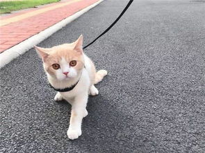 猫咪与孕妇的共处