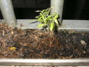 养花的土是否几年要换