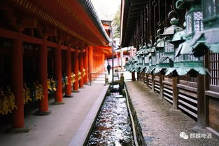 搜狐公众平台 日本 12月10日奈良马拉松 追思盛唐 日本人的 精神故乡