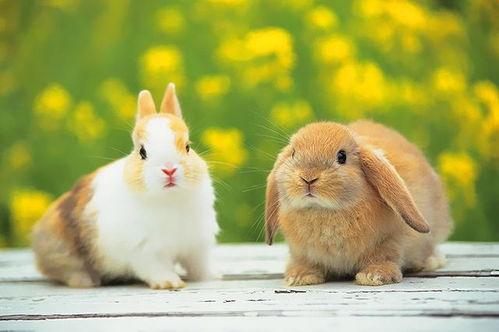 批八字晚上5点的兔子