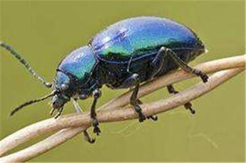 家中养花生小黑虫怎么办