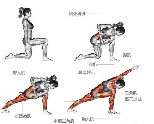 训练肌肉部位:臀大肌、阔背肌、三角肌、肘肌、夹肌、胸大肌.