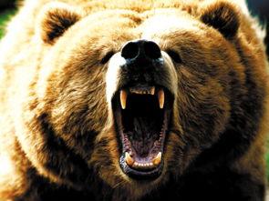 俄罗斯熊(为什么俄罗斯的国宝是北极熊)