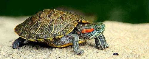 照顧烏龜的語錄