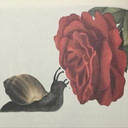 安徒生童话 蜗牛和玫瑰树
