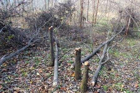 为什么不能砍伐树木