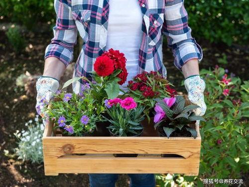 养花最好的温湿度是多少