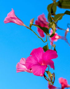 有关粉色夏天的诗词