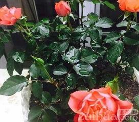 春季养花技巧