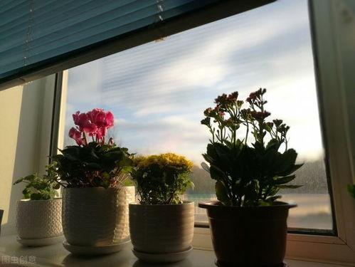 家里养花总养不活