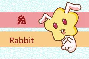 兔和羊属相合不合