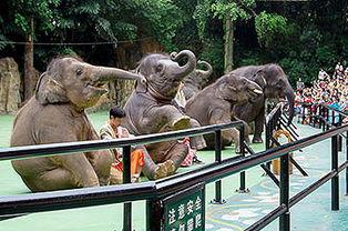 震撼广州长隆野生动物世界四大剧场表演