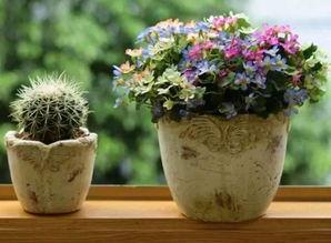 养花让我的生活更美好