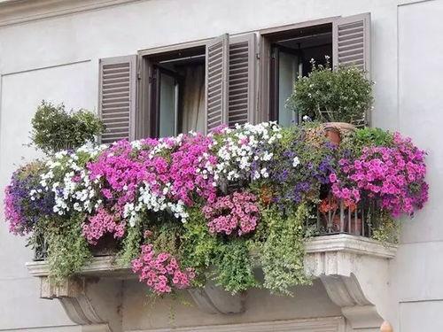 阳台养花干净