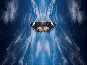 怎么面對蝴蝶效應風水