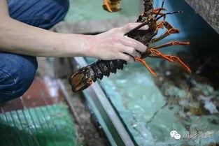 扬州的海鲜批发市场在什么地方?谢谢