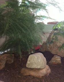 甘肃那里有养花红土