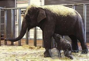 电影世界 大象宝宝奇迹重 生 视频 第2页