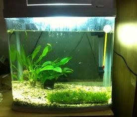 自制养花养鱼生态鱼缸