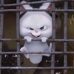 表情 爱宠大机密兔子头像高清兔子的表情邪恶又可爱 个性8899头像网 表情