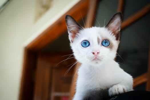 人喜欢闻猫咪身上的味道