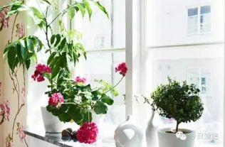 室内养花都有哪些品种大全
