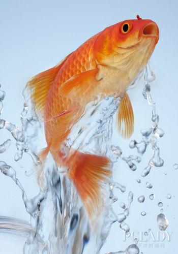 有关金鱼的小知识