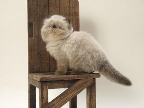维生素e对于猫咪的作用