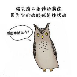 猫头鹰的冷知识