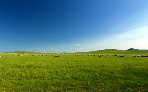 绿色护眼大草原风景图片高清壁纸tt98图片网