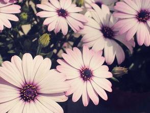 描写植物的好词好句好段感悟