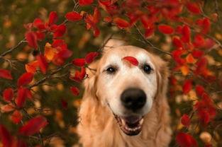 给喜欢狗狗 来自 大金毛 的妈妈的图片分享 堆