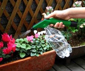 干热风天气时如何养花