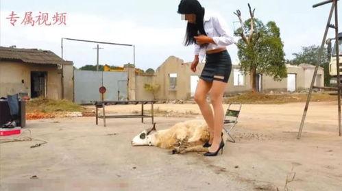 美女虐杀动物视频定制贩卖成产业链