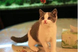 猫癣长什么样,猫癣多久才会好