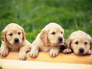 怎样预防狗狗寄生虫