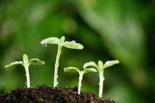 细致描写植株的句子
