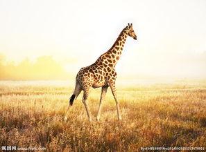 秦皇岛野生动物园鹿图片