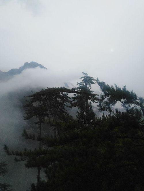 关于雨中的山林诗句
