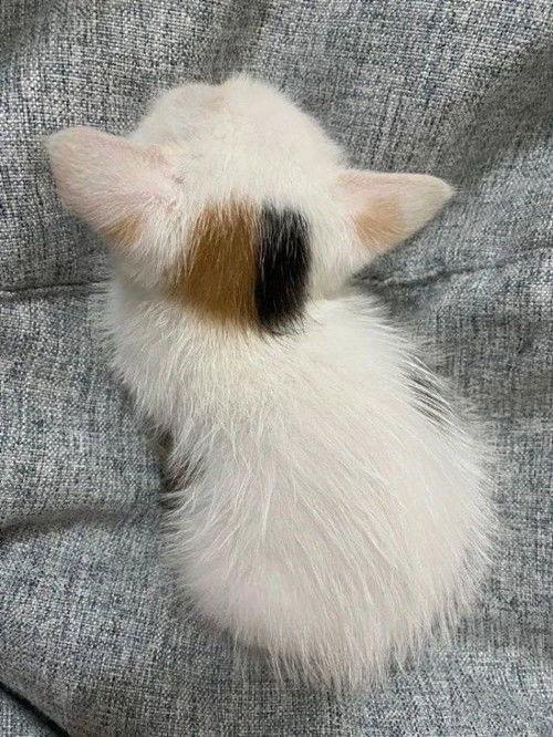 猫咪老师头上的图案