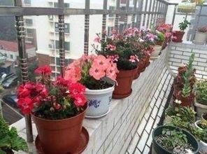 升高阳台养花盆