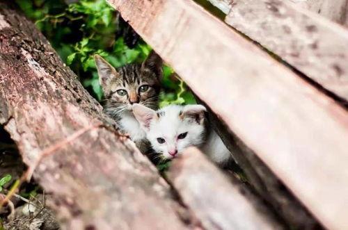 反虐待动物立法在世界范