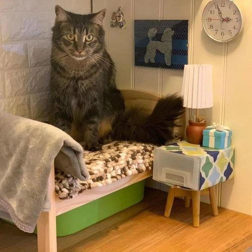 如何做猫咪的小床