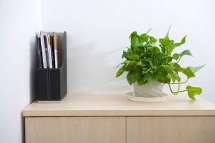 办公桌放什么植物风水好(办公桌上摆放植物有什么风水讲究)