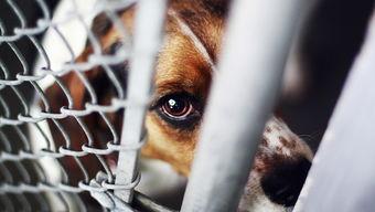 虐待动物事件频发,反虐待动物法还有多远