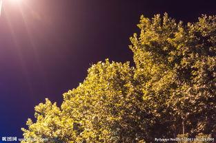形容灯光映射下的树木景色的诗句