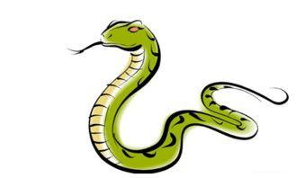 91属什么生肖婚配蛇